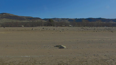 3-22-14 Curlew land