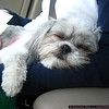 Molly passes out in the car.