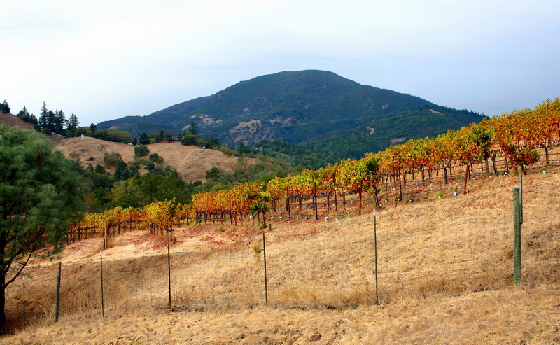 Beginning the climb over Mt. St. Helena (The peak in the distance).  Don't worry... you don't have to ride over the summit!!