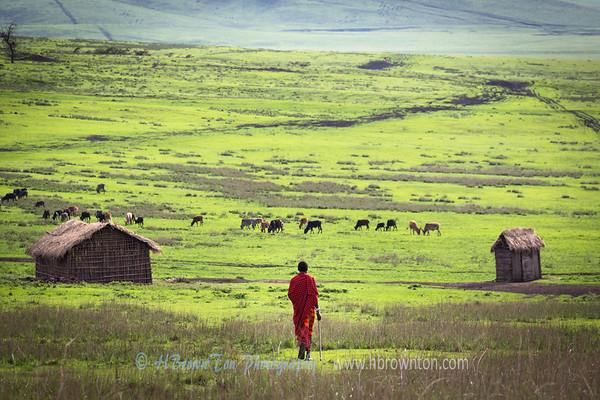 Maasai Sheppard Watching over his Flock