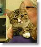 Trudy adopted,  3-6-04<br /> Trudy is a 6-month old spayed female that is introverted and would prefer a quiet home where she can enjoy lots of one-on-one time with her human companions.  She was bullied by her littermates and is very nervous around other cats.