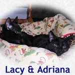 Lacy and Adriana adopted together 12/13/04.