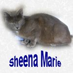 Sheena Marie adopted 10/14/04. It's hard to get a picture of this beautiful little girl. She is so hungry and posing for the camera is not her priority. Sheena Marie is sweet and friendly and will be gorgeous with a little time and good care.