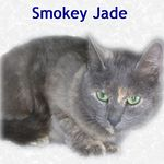 Smokey Jade adopted 12/17/04.  Smokey Jade has lovely green eyes that will melt your heart. She was having litter after litter without a home to call her own. Loved by an 11 year old girl that couldn't keep her but cared enough to contact Feline Friends.