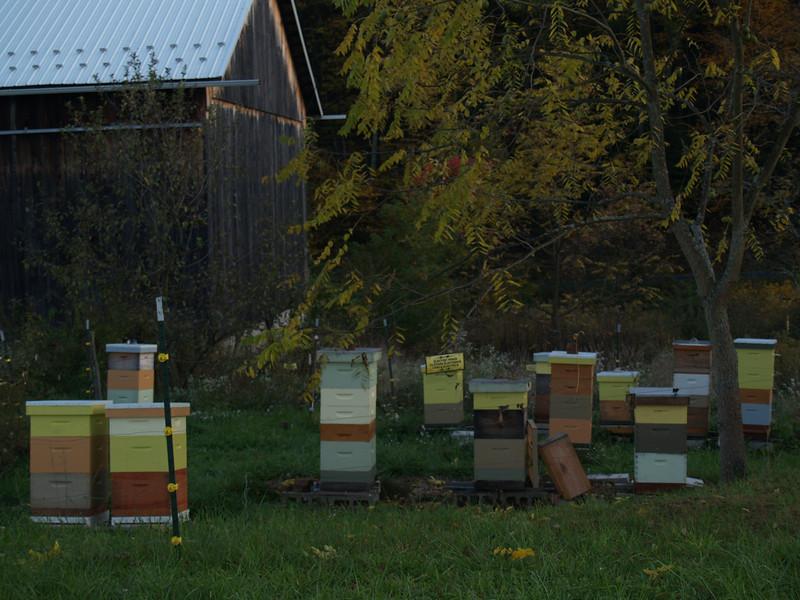 Alf's beehives