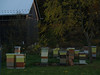 Alf's beehives