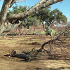 Continuing to clear the orchard of the old, half dead trees, making rom for new ones. Blue skies today.<br /> January 28, 2010