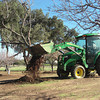 Continuing to clear the orchard of the old, half dead trees, making rom for new ones. Tractor rips them out with the roots.<br /> January 28, 2010