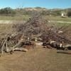 The burn pile.<br /> January 28, 2010