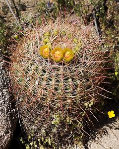 Anza Borrego Desert - Spring '10