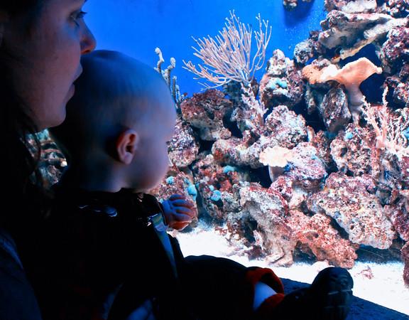 Aquarium with the Brilliants
