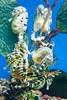 aquarium-0008