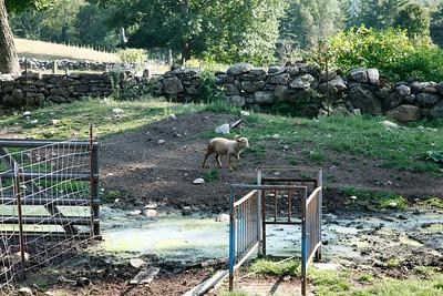 Aunt Sue and Uncle Bob's Farm.2015.0823
