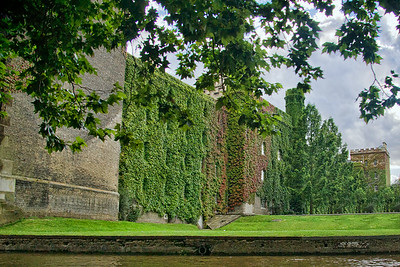 Lovely overgrown Ivy on the back of St.John's College
