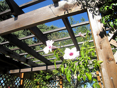 Bill Flodberg Memorial Garden Aug 27,2011 28