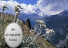 StewartWedding-9178edelweiss