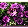 Happy Birthday Shambo (Sue)