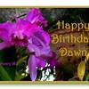 HB Dawn