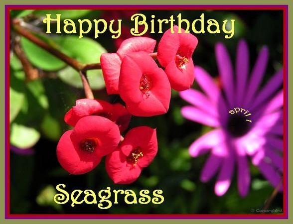 HB Seagrass