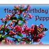 HB Peppi
