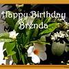 HB Brenda55