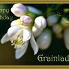 HB Grainlady