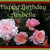 HB Arabella