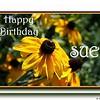 HB Sue