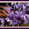 HB Diana55