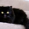 Ginny's cat (Izzy)