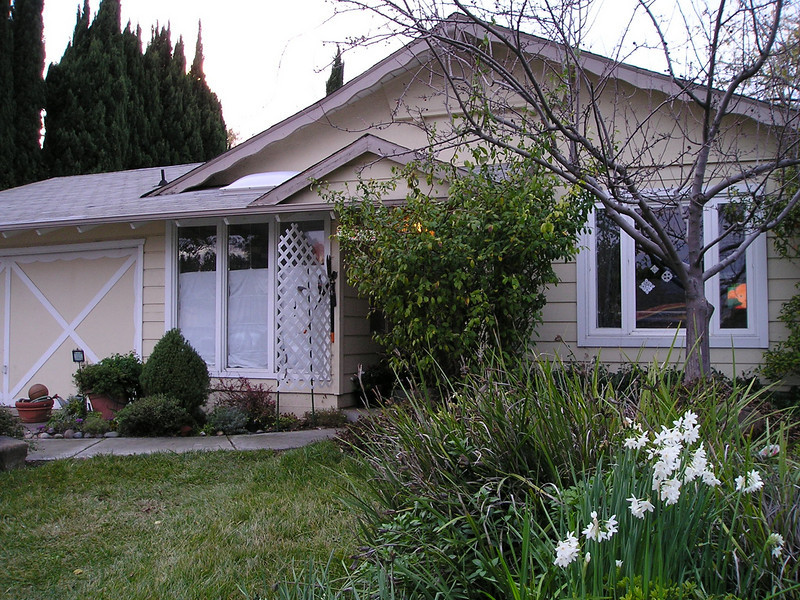 Front of susan and martin's house with christmas paperwhites (narcissus) blooming.