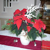 Beautiful poinsettia from Angie & Gary