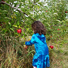 Apple Picking 9