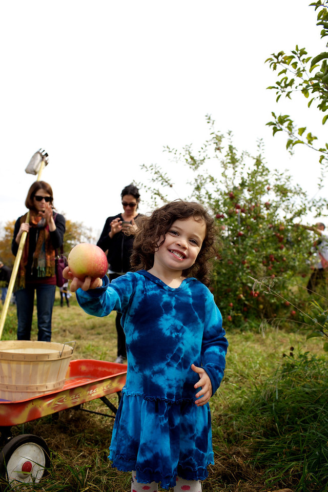 Apple Picking 8