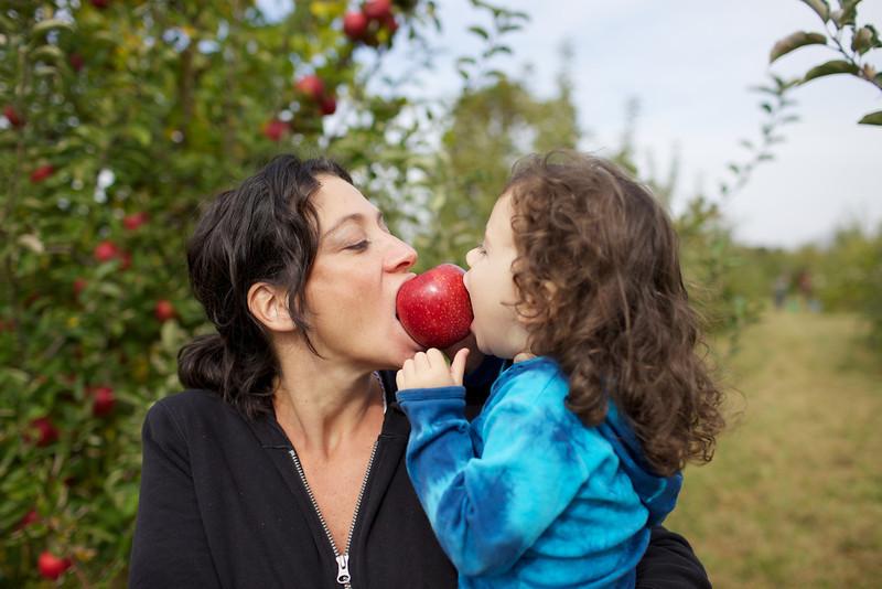 Apple Picking 12