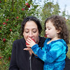 Apple Picking 11