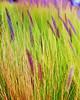 Watercolor Grass