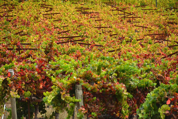 Fall in the vinyards