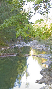 Bottom Pool from Upstream (note tree in water)