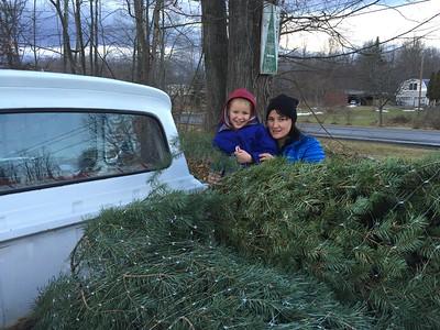 Tree Killing - December 2014