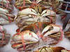 Poor little crabby creatures....banded and iced. I am forturnate to have gone scuba diving with your distant brothers!