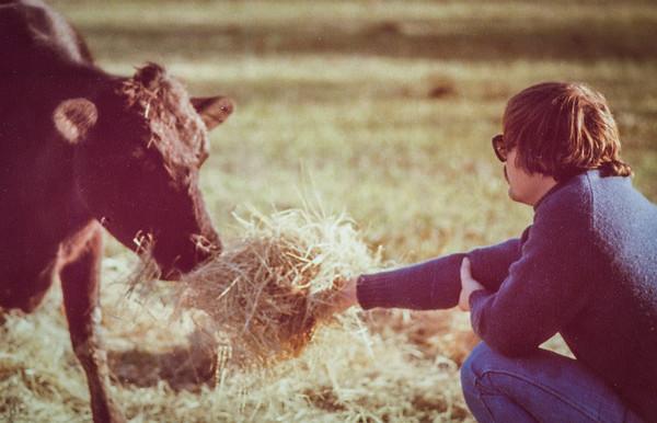 Steve feeding Bessie at Mr. Farmer's place.
