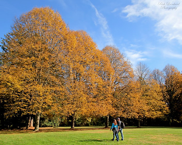 Couple walking amongst Autumn foliage at Muttontown Preserve.