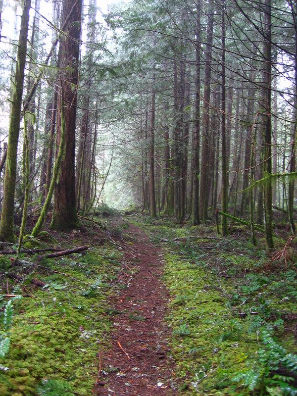 Cowichan Trail