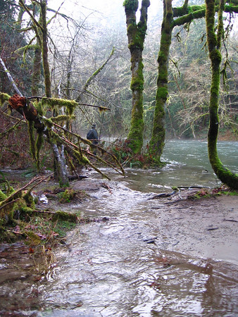 Cowichan River Jan 2006