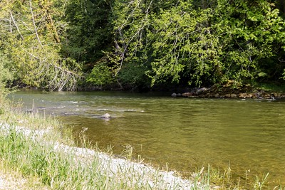 Cowichan River , may 2015