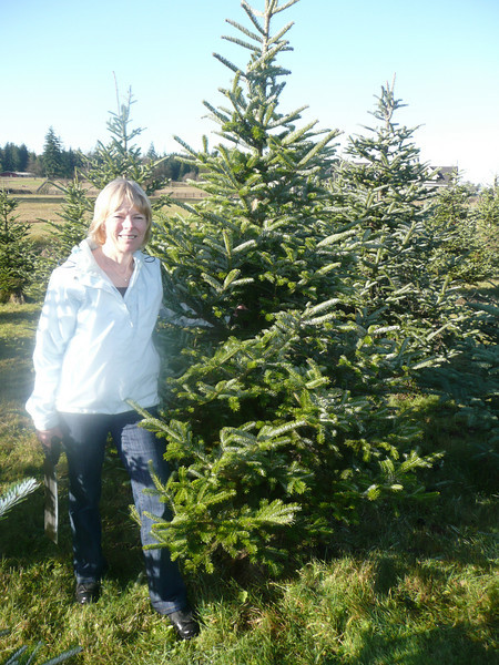Cutting Christmas trees 12/1/08