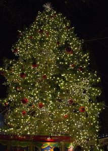Tree_6558