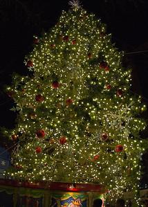 Tree_6557