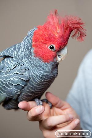 Des Chris & Birds - 131010